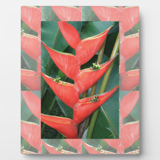 Flowers Heliconia Bamboo from Costa Rica Love Gift Plaque