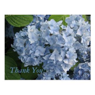 Flowers (Hydrangeas) Postcard