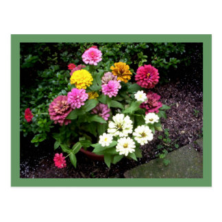 Flowers In A Planter Postcards