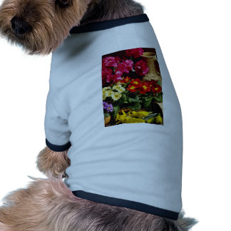 Flowers in brass bowl  flowers pet clothing