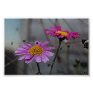 Flowers in cobwebs poster