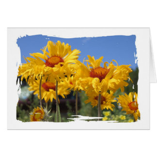 Flowers in Estes Park Card