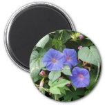 Flowers in Greece Magnet