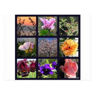 Flowers in Israel Postcard