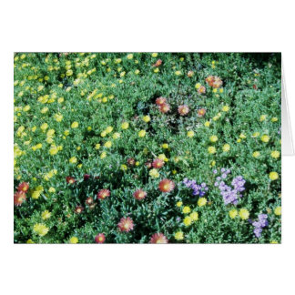 flowers in mexico stationery note card