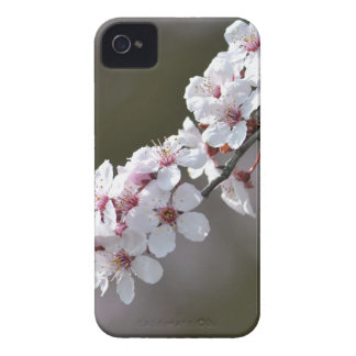 Flowers in Spring iPhone 4 Case-Mate Case