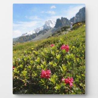 Flowers in the Alps - Beautiful! Photo Plaques