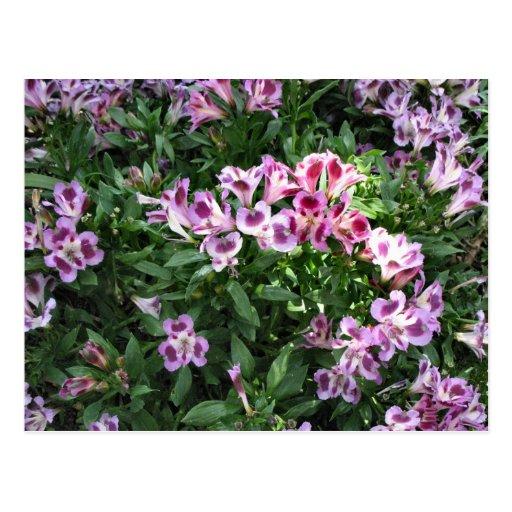 flowers in the garden postcard