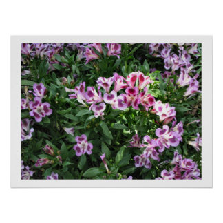 flowers in the garden posters