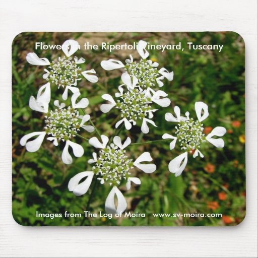 Flowers in the Ripertoli Vineyard, Tuscany Mousepads