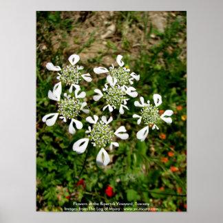 Flowers in the Ripertoli Vineyard, Tuscany Poster