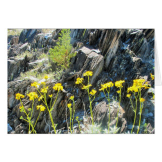 Flowers In The Sonoran Desert Card