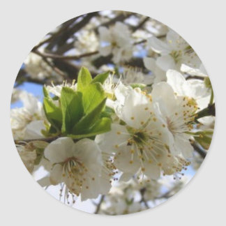 Flowers In White Classic Round Sticker