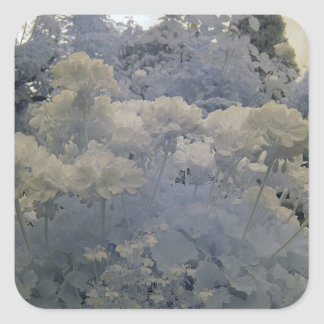 Flowers/infrared photography square sticker