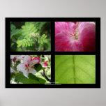 Flowers & Leaves | Print