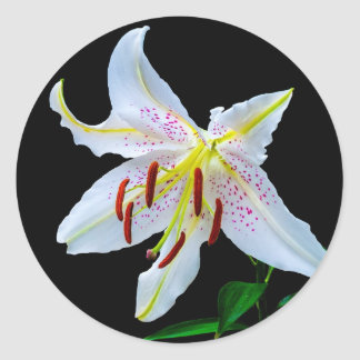 Flowers Lilies Blossoms Wedding Shower Love Peace Round Stickers