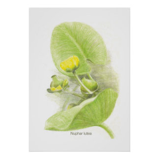 Flowers lilies poster