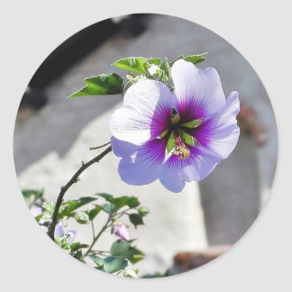 Flowers Missions Leaves Leaf Roofs Classic Round Sticker
