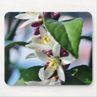 Flowers Myer Lemons Trees Mouse Pad
