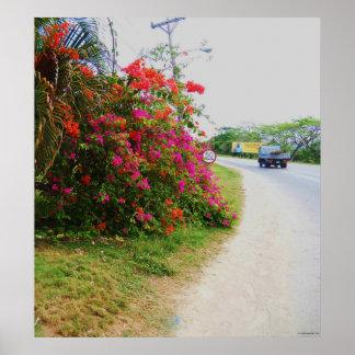 Flowers Norman Manley Blvd Negril Jamaica Canvas P Poster