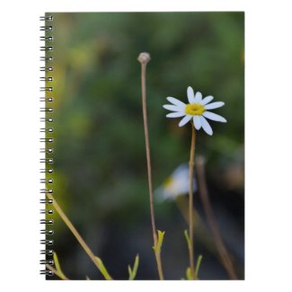 Flowers Note Book