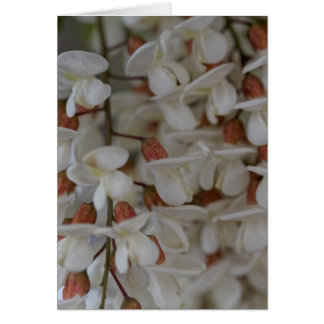 Flowers of a black locust card