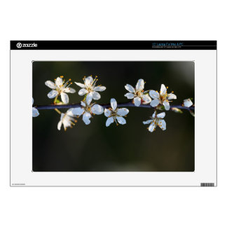 Flowers of a Blackthorn bush Decal For Laptop