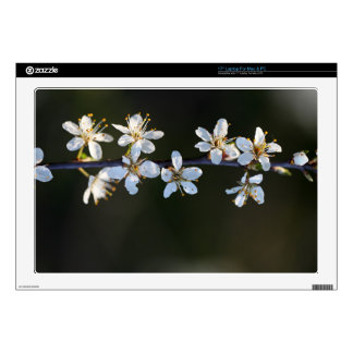 Flowers of a Blackthorn bush Decals For Laptops