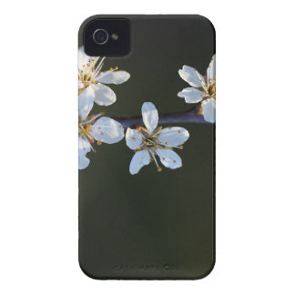 Flowers of a Blackthorn bush iPhone 4 Case