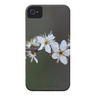 Flowers of a Blackthorn bush iPhone 4 Cover