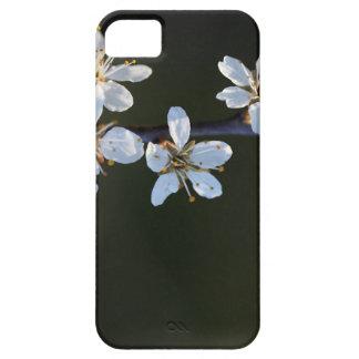 Flowers of a Blackthorn bush iPhone SE/5/5s Case