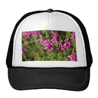 Flowers of a Dorset heath (Erica cilaris) Trucker Hat