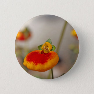 Flowers of a lady's purse flower button