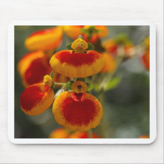Flowers of a lady's purse flower mouse pad