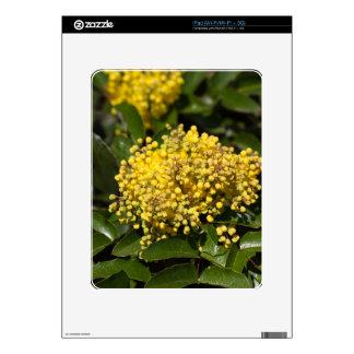 Flowers of a Oregon grape bush Skins For The iPad