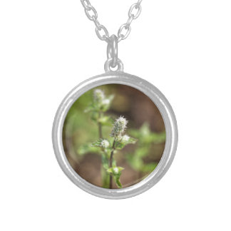 Flowers of a peppermint plant, Mentha x piperita Silver Plated Necklace