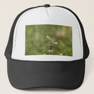 Flowers of a peppermint plant, Mentha x piperita Trucker Hat