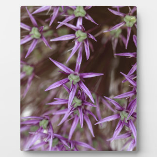 Flowers of a Persian onion Plaque