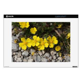 Flowers of a spring cinquefoil laptop skin