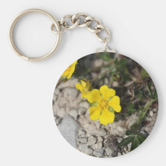 Flowers of a spring cinquefoil or spotted cinquefo keychain