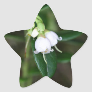 Flowers of a wild lingonberry (Vaccinium vitis-ide Star Sticker