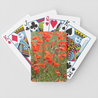 Flowers of common poppy in a field. bicycle playing cards
