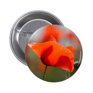 Flowers of common poppy in a field. button