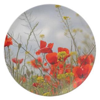 Flowers of common poppy in a field. dinner plate