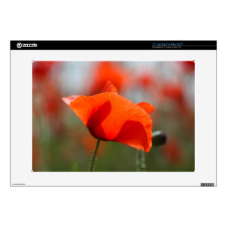 Flowers of common poppy in a field. laptop decals