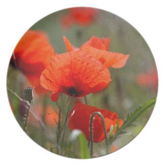 Flowers of common poppy in a field. melamine plate