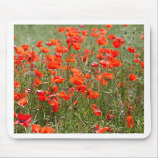 Flowers of common poppy in a field. mouse pad