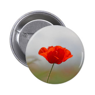 Flowers of common poppy in a field. pinback button
