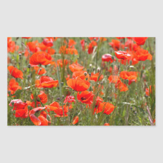 Flowers of common poppy in a field. rectangular sticker