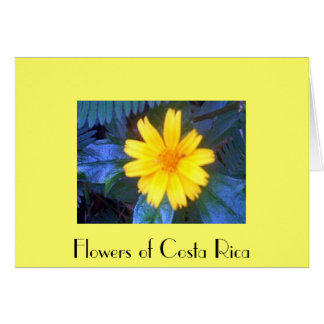 Flowers of Costa Rica 02 a Card